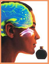 Ароматы и запахи для улучшения работы мозга.