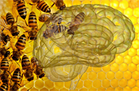 Лес, пчелы, мед. Модель работы мозга, объяснение для подростка.